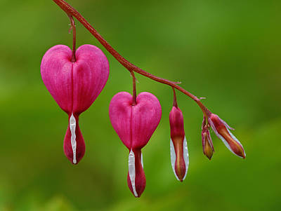 Heart String Poster