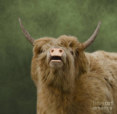 Heelan Coo Poster by Linsey Williams