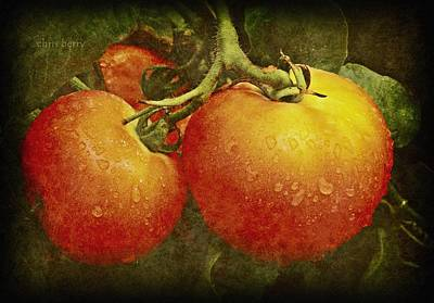 Heirloom Tomatoes On The Vine Poster by Chris Berry
