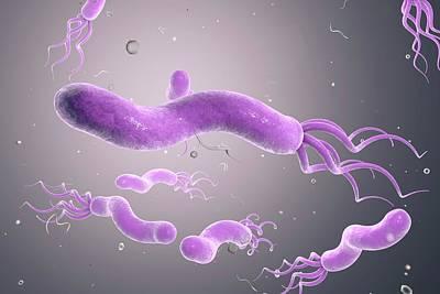 Helicobacter Pylori Bacterium Poster