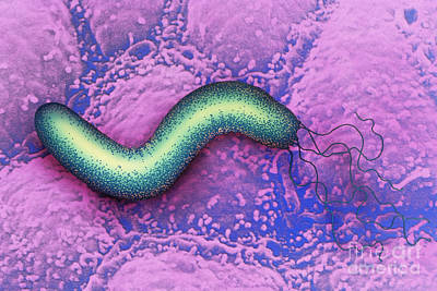 Helicobacter Pylori Poster by Chris Bjornberg