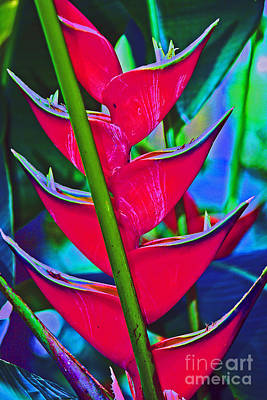Heliconia Abstract Poster