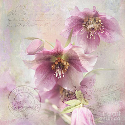 Poster featuring the photograph Hellebore by Sylvia Cook