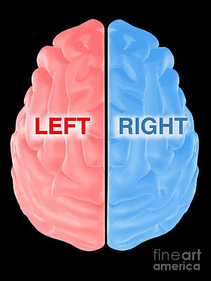 Hemispheres Of The Brain Poster