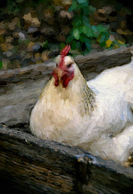 Hen In A Box Poster