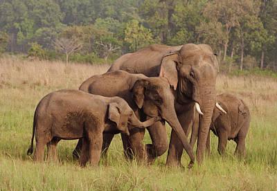 Herd Of Indian Asian Elephants, Corbett Poster by Jagdeep Rajput