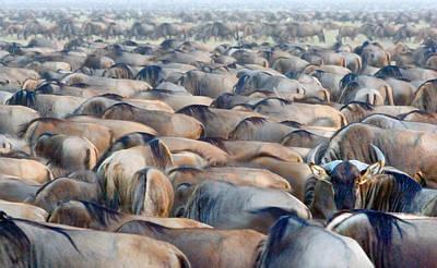 Herd Of Wildebeests In A Field Poster