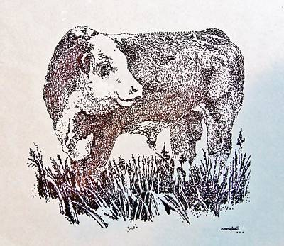 Polled Hereford Bull  Poster