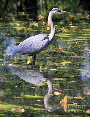 Poster featuring the photograph Heron Hunter by Kenny Glotfelty