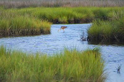 Heron In A Salt Marsh Poster by Bill Cannon