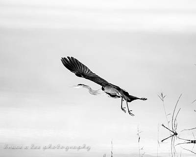 Heron In Black And White 2 Poster by Bruce A Lee