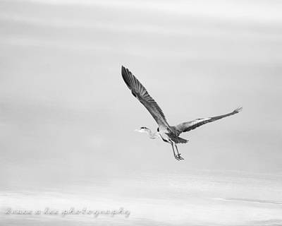 Heron In Black And White Poster by Bruce A Lee