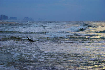 Heron In The Surf Poster