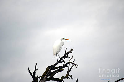 Heron On A Dead Tree Poster