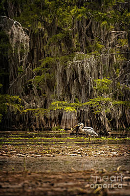 Heron On Caddo Lake II Poster