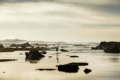 Heron On The Beach, Mavericks Beach Poster by Panoramic Images