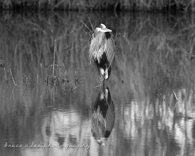 Heron Reflection Poster by Bruce A Lee
