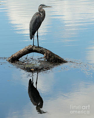 Poster featuring the photograph Heron Reflection by Kenny Glotfelty