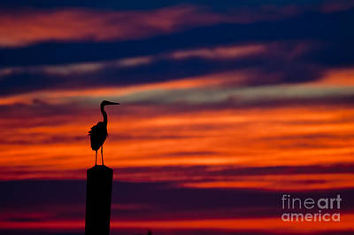 Heron Sunset Silhouette Poster by Richard Mason