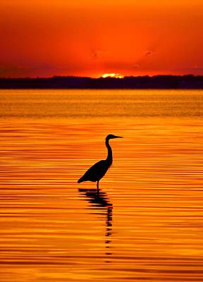 Heron With Burnt Sienna Sunset Poster