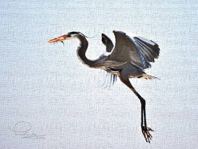 Heron With Catch Poster
