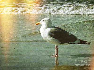 Herring Gull Watching Poster