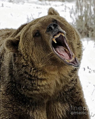 Hey Bear Poster by Wildlife Fine Art