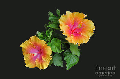 Poster featuring the photograph Hibiscus Duo by Susan Wiedmann