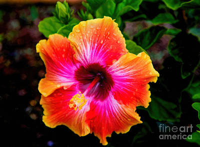 Hibiscus Poster by Jon Burch Photography