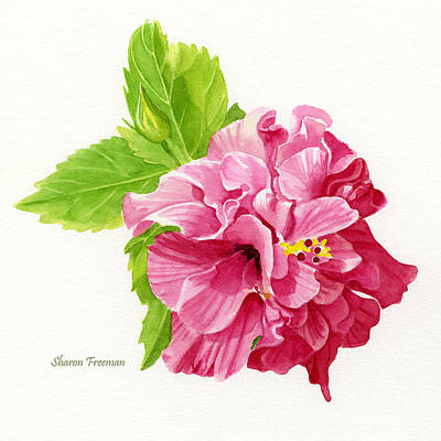 Hibiscus Rosa-sinensis Poster