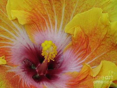 Poster featuring the photograph Hibiscus by Tam Ryan