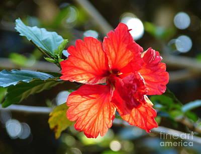 Hibiscus Veins Poster