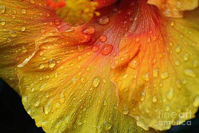 Poster featuring the photograph Hibiscus Water Drops by Lisa L Silva