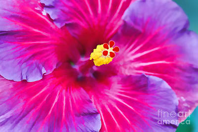 Hibiscus Watercolor Poster by Terry Weaver