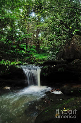 Hidden Rainforest Poster by Kaye Menner