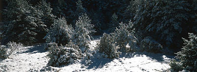 High Angle View Of A Snow Covered Fir Poster