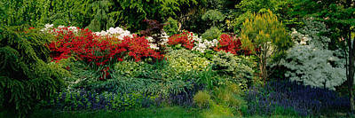 High Angle View Of Flowers In A Garden Poster by Panoramic Images