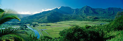 High Angle View Of Taro Fields, Hanalei Poster by Panoramic Images
