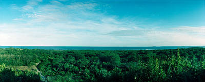High Angle View Of Trees With Atlantic Poster
