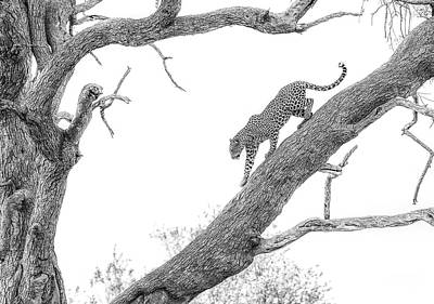 High Key Leopard Poster