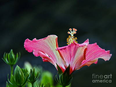 High Speed Hibiscus Flower Poster