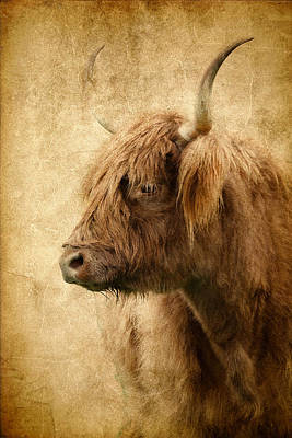 Highland Bull Poster by Athena Mckinzie