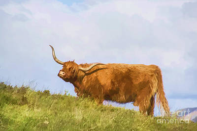 Highland Cow Watercolour Poster
