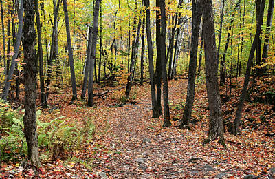 Hiking Trail In Autumn In Gatineau Park In Quebec Poster