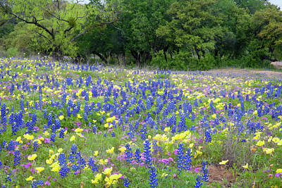 Hill Country, Texas, Bluebonnets Poster