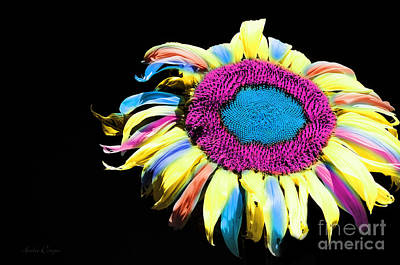 Hippie Sunflower Rainbow Painterly Poster by Andee Design