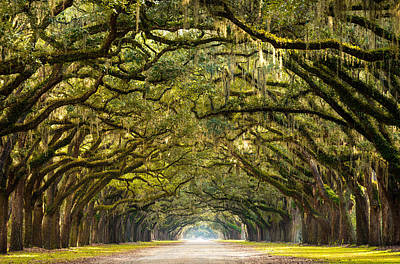 Historic Wormsloe Plantation Oak Trees Poster by Serge Skiba