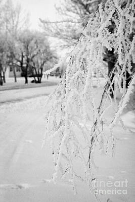 hoar frost on overhanging bare tree branches during winter Forget Saskatchewan Canada Poster by Joe Fox