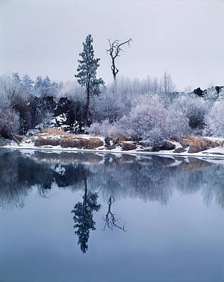 Hoar Frost On Pacific Willow, Deschutes Poster