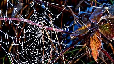 Poster featuring the photograph Hoary Web by Julia Hassett